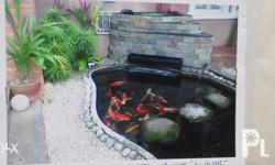 for Clean and Clear water for your fishpond/grotto and