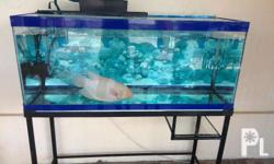 For Sale: Aquarium: 75 gallons with Giant Gurami only