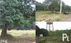 For sale two (2) mango farm lots in naic,cavite(rush