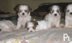 3 Females and 2 Males available Date of Birth: April