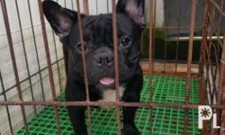 For Stud Royal Baytown line Big Head 09175482477