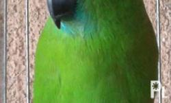 I DO HAD A HEALTHY PAIR OF TALKING PARROTS FOR SALE AT