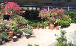 We are the largest garden shop and modern landscaper in