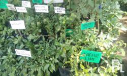 Plants you can grow in pot,containers,garden,farm are