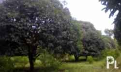 FOR DIRECT BUYERS ONLY: 5 HECTARES FARM LOT FOR SALE IN