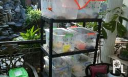 hamster and their accesories for sale( looking for