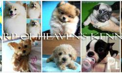 HarpofHeaven's Kennel is a small home kennel located at