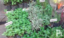 We are selling Herbs and medicinal plants at the lowest