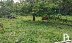 Lot for Sale in Dumaguete City This property is right