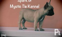 MYSTIC TIE KENNEL Peace be with you. Are you looking