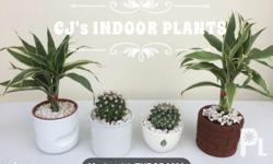 Indoor Plants Price range: 150php to 180php Per order