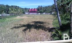 10,000 sqm more or less of rice and coconut farm lots