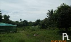 Land for Development in Ocampo, Camarines Sur. Asking