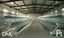 A-Frame layer cages , with feeding capacity 96 heads- 3