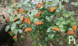 Looking for live butterflies? Come,visit us.avail our