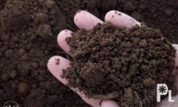 Loam Soil Good for plants. P150 per sack Approximately