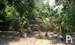 Vacant lot for sale 631 sqm. at the heart of Urdaneta