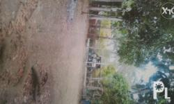2000 square meters LOT ONLY (farm) Location: Tagaytay