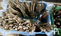 For Sale MadreDeAgua/Trichantera cuttings for