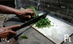 We sell cuttings for planting. Chopped Madre de Agua