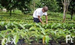 La Coriana Nursery is now 2 years in service at Online