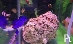 Marine and selected fresh water fishes.price and sizes
