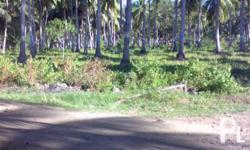 NICE AGRICULTURAL LAND FOR SALE ? Digos City
