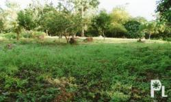 Titled Residential Lots with a total area of 34,636
