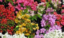 wholesale plant supplier large scale plant supplier