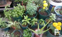 We design potted herbs and medicinal plants We sell