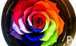 This is a preserved rose from Ecuador in rainbow color