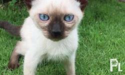 Selling at 2600 for male kitten and 2900 for female