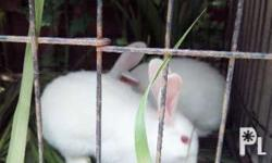 Buck and Doe available Breeder age Diet: Napier grass,
