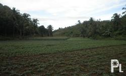 11-HECTARE FARM ? A developed farm with a total area of