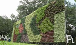 We accept Vertical Gardening We made your wall more