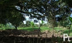 RUSH SALE AGRICULTURAL LAND!! PRICE: P2M/hectare AREA: