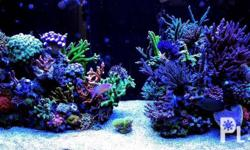 Saltwater Aquarium System Set Up Marine Aquascape For Sale In Quezon City National Capital Region Classified Philippineslisted Com