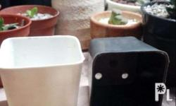 2' �� 2' Mini Square Pot. Avail Colors: White and