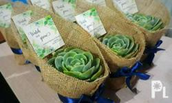 Succulent plants souvenirs for all occassions Price