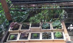 Succulents for sale. 30php per piece. Note: Wooden