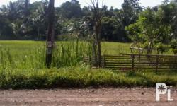 This is a 14 hectare rice farm with 2 hectares of
