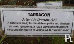 TARRAGON is one of the four fine herbs of French