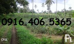 Alfonso Residential / Farm Lot For Sale Titled Farm