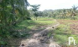 Titled industrial lot in Carmen Cebu 3 hectares area: 3