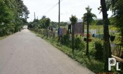 Titled industrial lot in Carmen Cebu 5 hectares area: 5