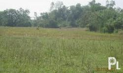 Land For Sale 3.2 Hectares = 32,000 Square Meters