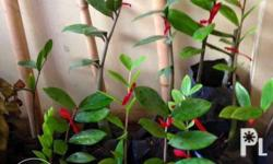 Welcome plants, limited supply only! In black seedling
