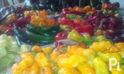 Habaneros thrive in hot weather. As with all peppers,